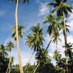 phangan_beach04